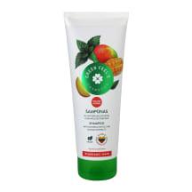 GREEN FEEL'S Šampūnas su dilgėlių,mangų eksr