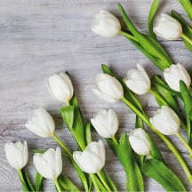 Servetėlės PAW balt. tulpės 33x33cm SS21