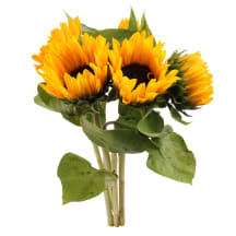 Saulespuķes 50cm, 5 kāti