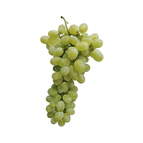 Vīnogas Aledo gaišās 22+ mm 2. šķira kg