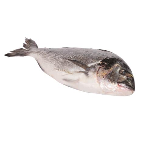 Jūras karūsa Dorada neķidāta ar galvu kg