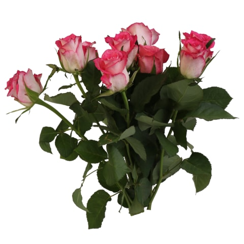 Rožu pušķis Rimi 40cm 9gab dažādās krāsās