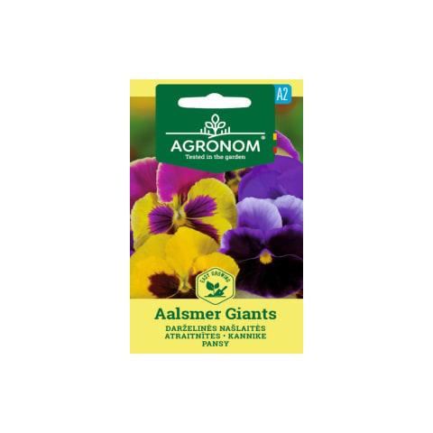 Vijolītes Aalsmer Giants Agronom