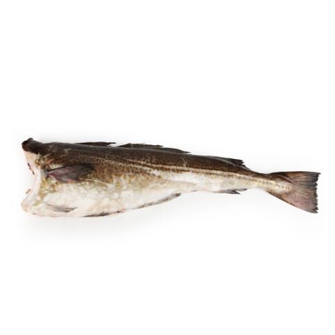 Atlantijas menca bez galvas ķidāta 1-4kg