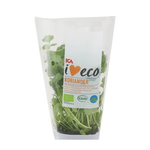 Koriandrs podiņā I Love Eco 30g