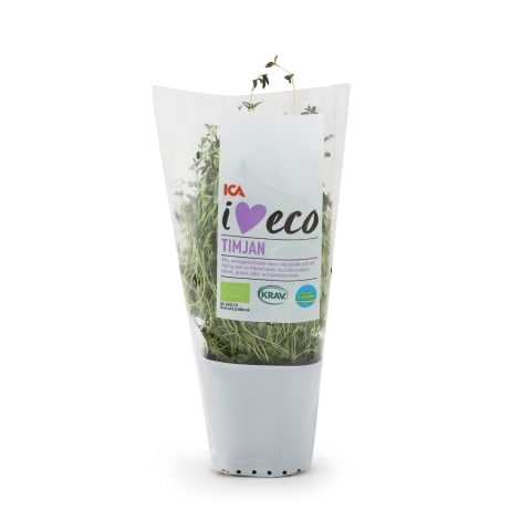 Timiāns podiņā I Love Eco 30g