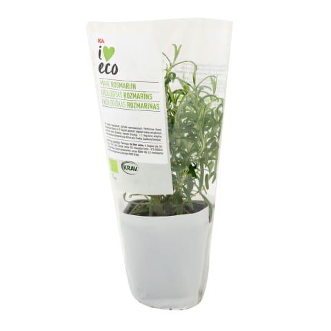 Rosmariin potis I Love Eco tk