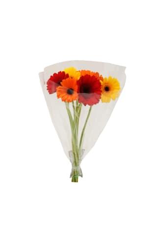 Gerberas mazās 50cm 30 ziedi