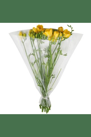 Frēzijas (10 gab), 40cm