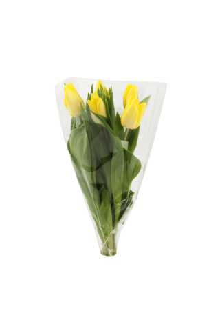 Tulpju pušķis mazais, 5 ziedi