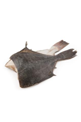 Baltijas plekste ķidāta bez galvas sverama