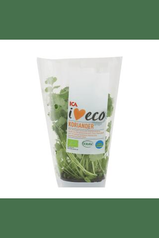 Koriandrs podiņā I love Eco ICA