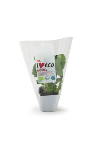 Baziliks podiņā I love Eco ICA