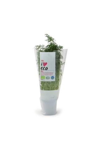 Dilles podiņā I love Eco ICA