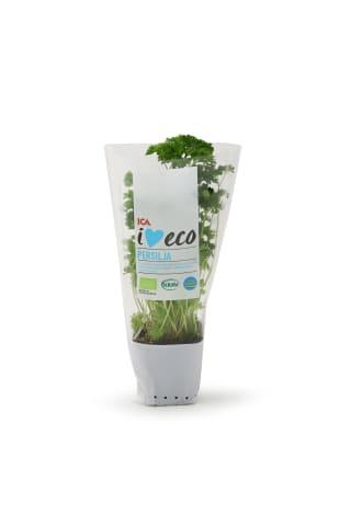Pētersīļi podiņā I love Eco ICA
